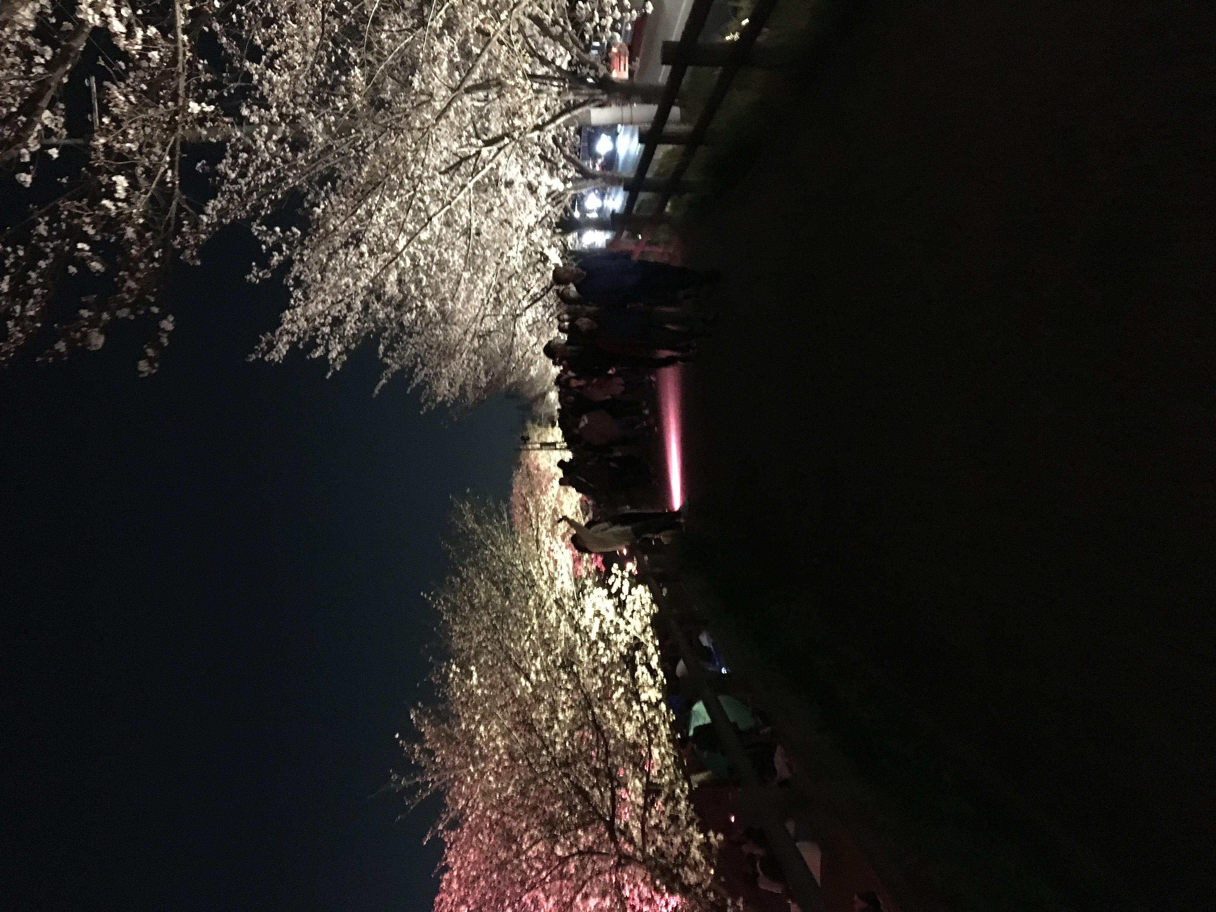 夜桜観に行って来ました‼️